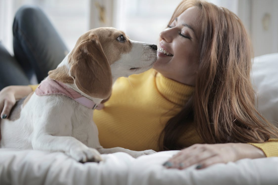 Woman in Yellow Turtle Neck Sweater Lying with White and Brown Short Coated Dog