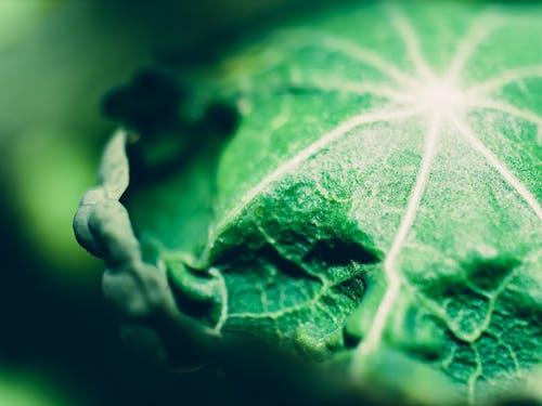 makro, yakından, Yaprak, yeşil içeren Ücretsiz stok fotoğraf