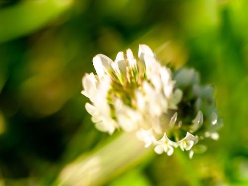 beyaz, çiçek, çiçekli, makro içeren Ücretsiz stok fotoğraf
