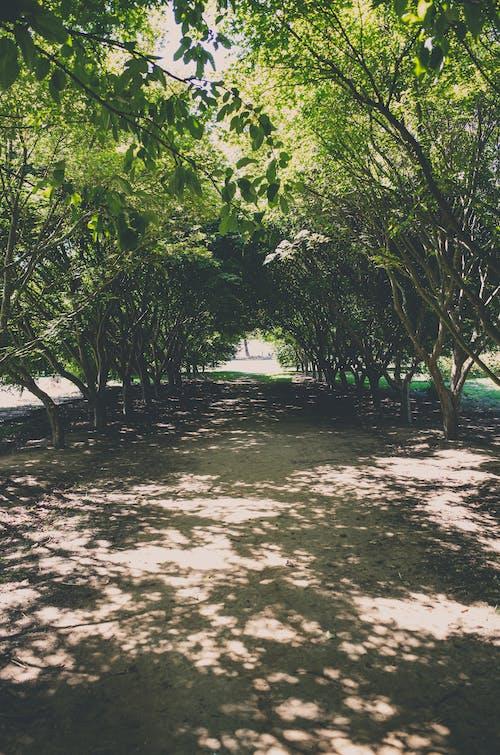 açık hava, ağaçlar, gün ışığı, keçi yolu içeren Ücretsiz stok fotoğraf
