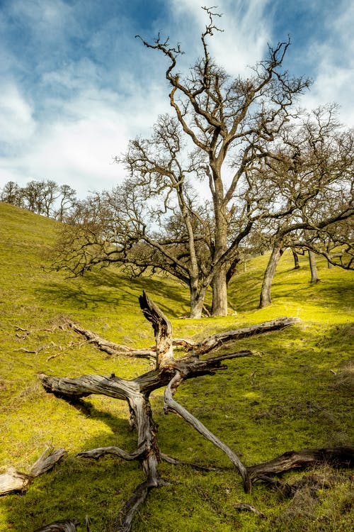 Immagine gratuita di alberi, azzurro, bel paesaggio, blu