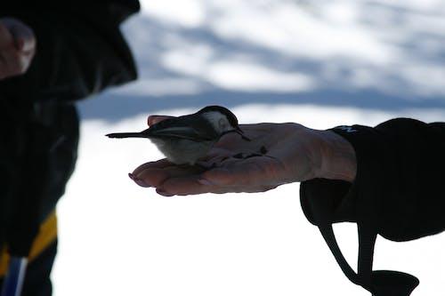 Free stock photo of chickadee ridge