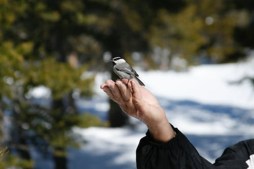 White and Black Bird on Persons Hand