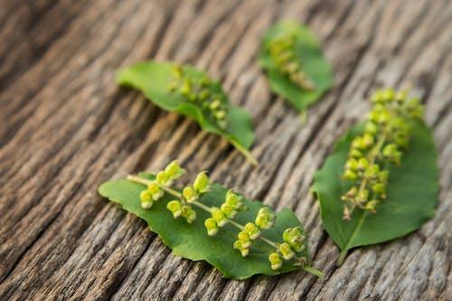 Immagine gratuita di a base di erbe, attraente, basilico, caldo