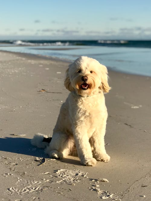 Photo of White Dog on Beach