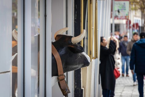 Free stock photo of cow, lookout, shoping