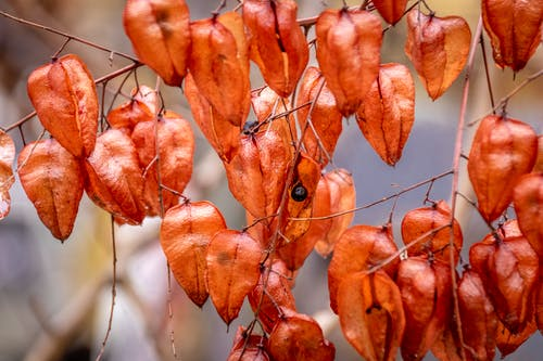 Free stock photo of autumn color, burry, plant