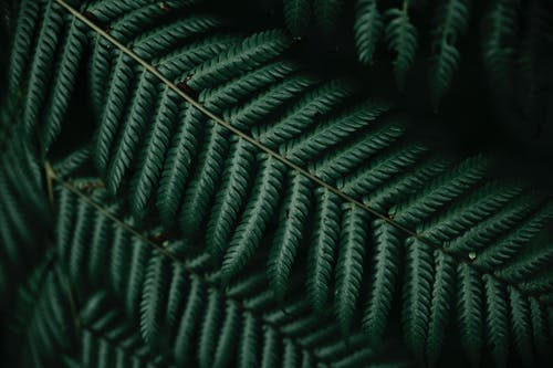 Close Up Photography of Dark Green Fern Leaves