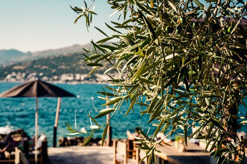 Free stock photo of adriatic, bar, beach