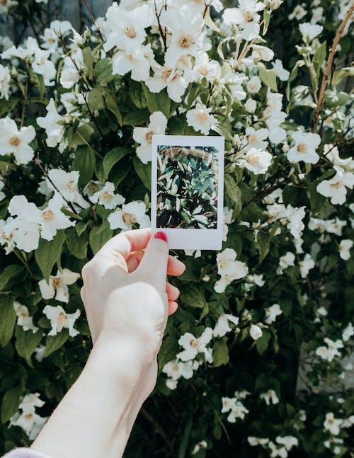 그림, 꽃 피는 식물, 꽃이 피는, 꽃잎의 무료 스톡 사진