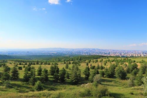 Free stock photo of arazi, doğa, manzara, orman