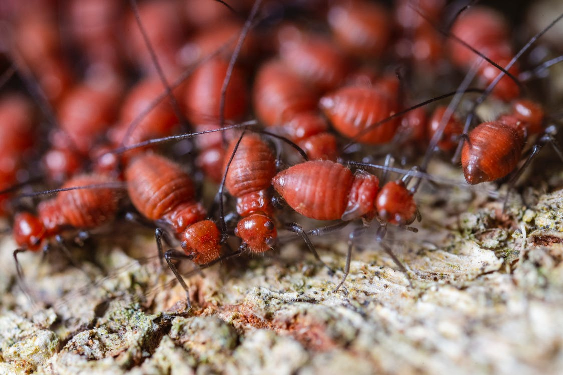 From above closeup of fearful brown termites with ribbed shells and long antennae exploring shabby surface in zoological garden