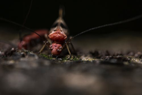 Ant crawling on uneven terrain in zoo