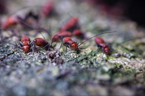 Closeup of fearful brown pismires with black antennae and paws crawling on uneven surface in zoological garden in daylight