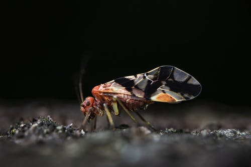 Brown and Black Insect on Gray Surface