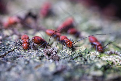 Colony of dangerous ants crawling on mossy terrain