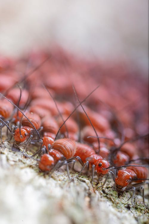 Colony of termites crawling on dry terrain