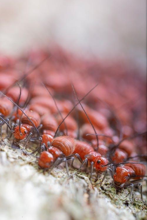 Colonie De Termites Rampant Sur Un Terrain Sec