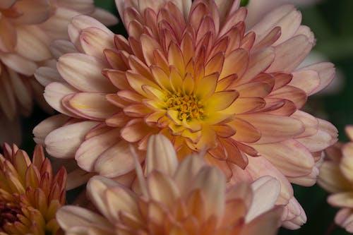 bitki örtüsü, büyüme, çiçek, Çiçek açmak içeren Ücretsiz stok fotoğraf