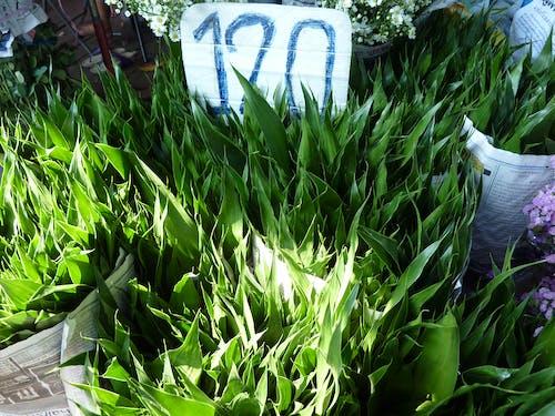 Δωρεάν στοκ φωτογραφιών με αγορά, φύλλα