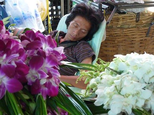 Δωρεάν στοκ φωτογραφιών με napping, αγορά, λουλούδι, ορχιδέα