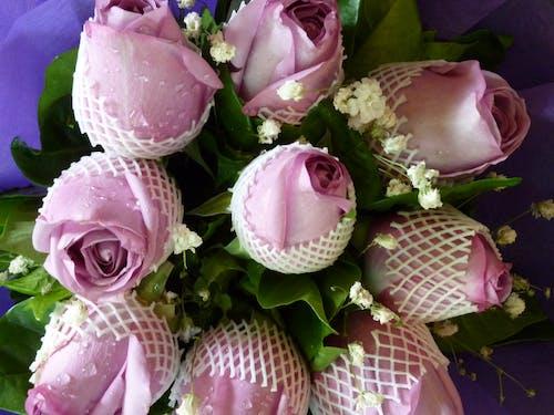 Δωρεάν στοκ φωτογραφιών με μπουκέτο λουλούδια, μπουμπουκιάζω