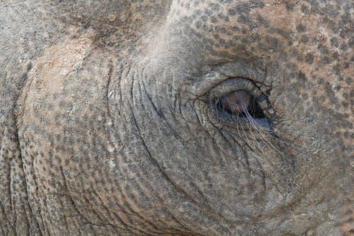 Δωρεάν στοκ φωτογραφιών με ελέφαντας