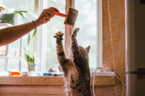 Cat Playing With A Pet Brush