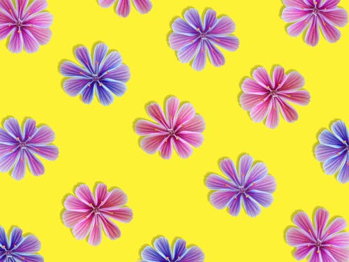 Purple and Pink Flower Illustration