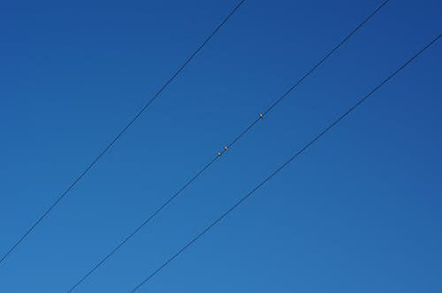 Free stock photo of bird, blue, cable