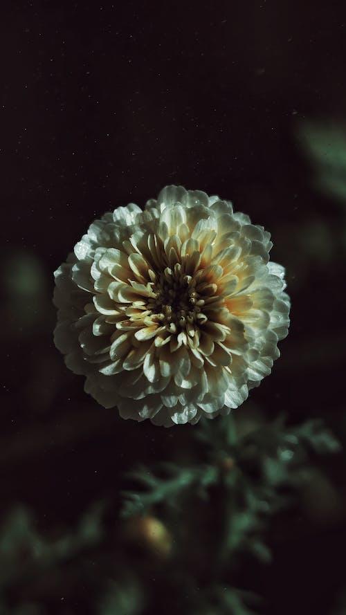 Fotos de stock gratuitas de belleza en la naturaleza, bonito, cámara vintage, campo de girasoles