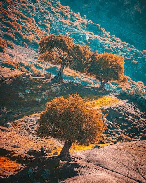 Darmowe zdjęcie z galerii z cienie, maroko, ranek, spotkanie wschodu słońca