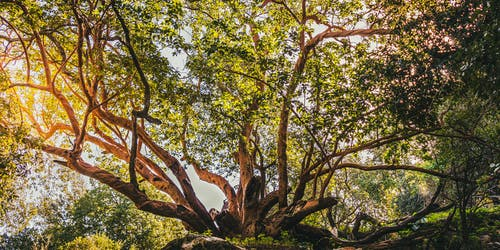 Безкоштовне стокове фото на тему «дерева, зелений, Природа, старе дерево»