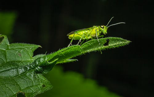 Close-Up Photo of an Insect Perched on Green Leaf