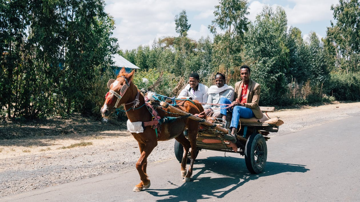 People Riding on Carriage Pulled by a Horse