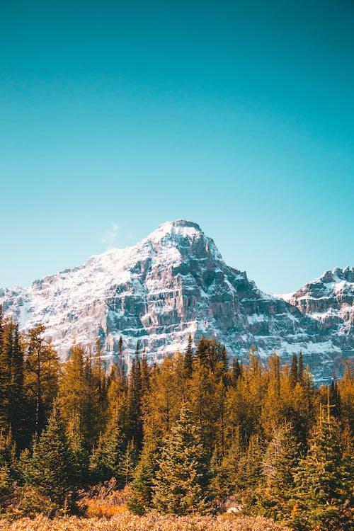 Зеленые деревья возле горы, покрытые снегом