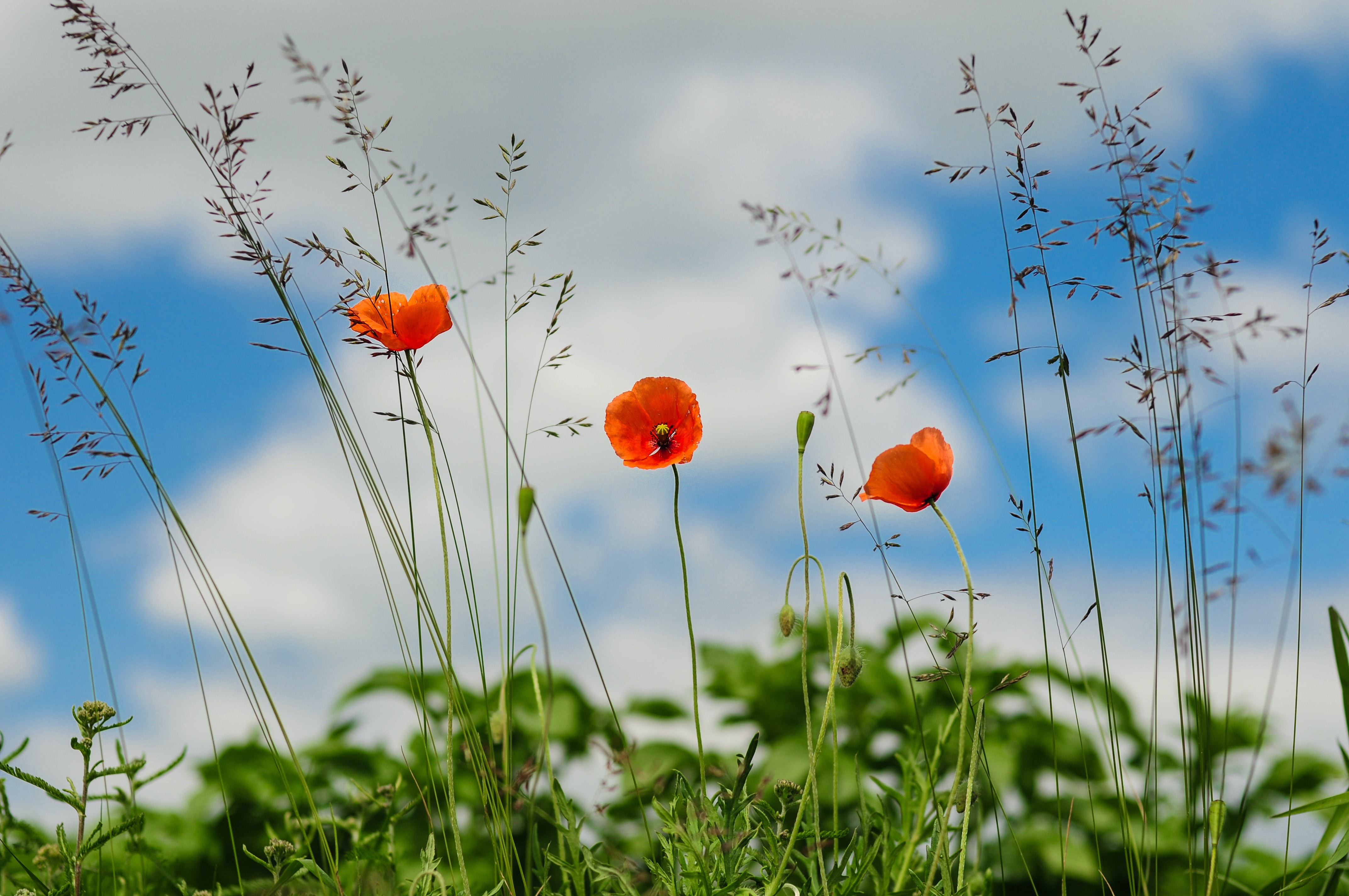 Free Stock Photo Of Botany Flower Meadow