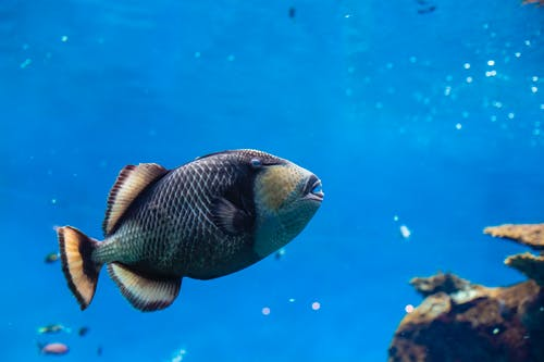 Darmowe zdjęcie z galerii z dzika przyroda, fotografia przyrodnicza, fotografia zwierzęcia, morze