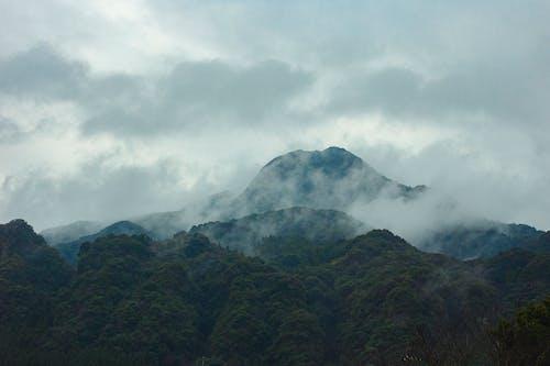 Základová fotografie zdarma na téma cestování, dobrodružství, dřevo, hora