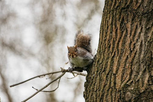 White and Brown Squirrel on Brown Tree Branch