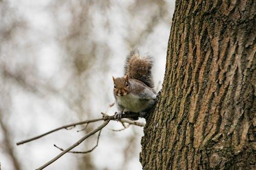 Foto d'estoc gratuïta de animal, arbre, branca d'arbre, escorça d'arbre