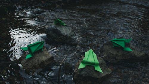Free stock photo of brook, fleuve, frog