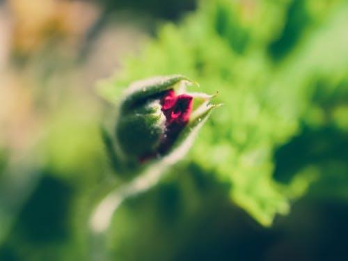 Photos gratuites de dehors, fleur, macro, nature