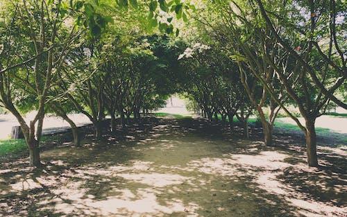 Photos gratuites de arbres, chemin, dehors, lumière du soleil