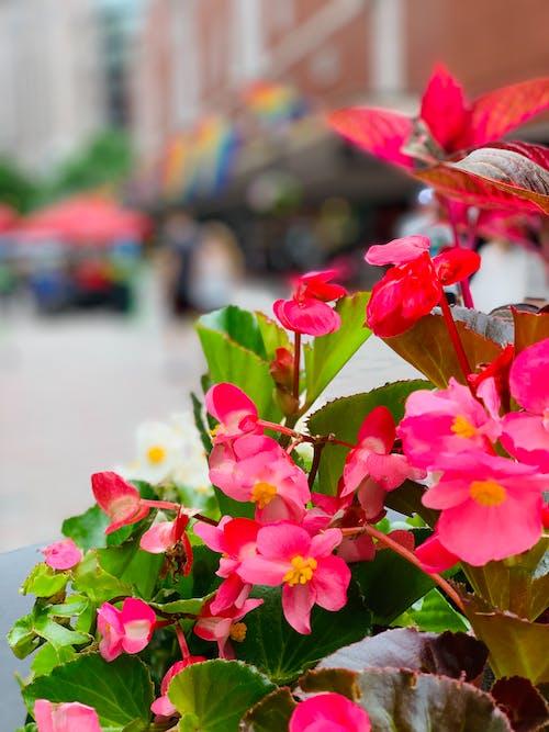 Foto stok gratis bunga, bunga yang indah, merah, musim semi