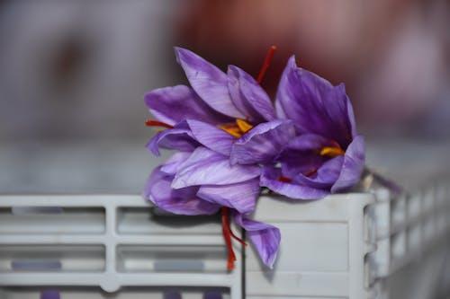 Foto stok gratis azaffron, bunga, kaburasaffron, kunyit