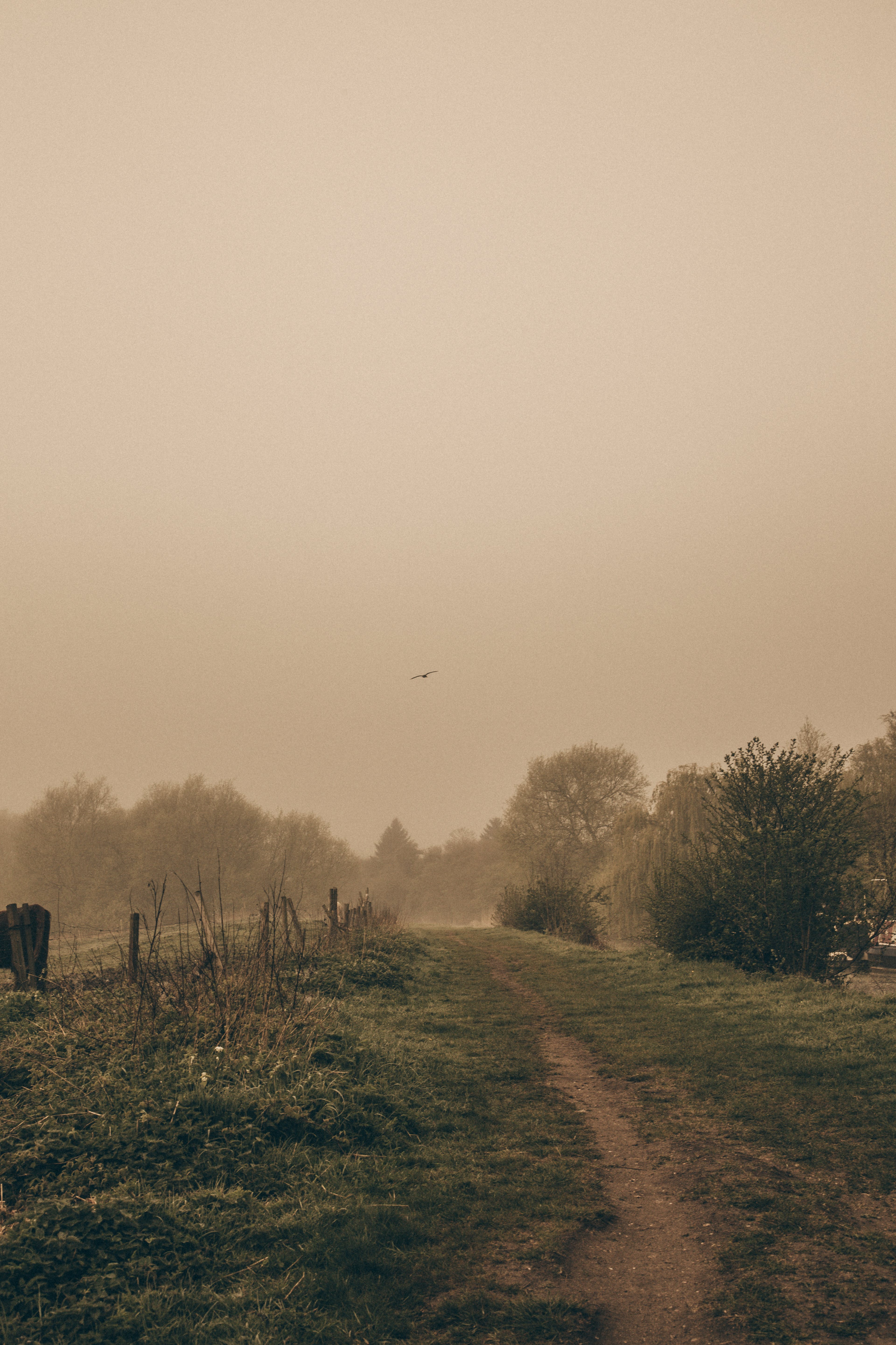 Free stock photo of bookcover, haze, heron, orange skies