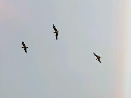Aves Volando En El Cielo