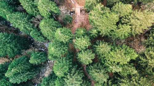 Top View Photo of Green Trees