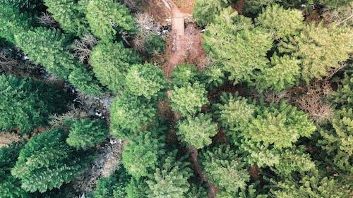 Foto De Vista Superior De árboles Verdes